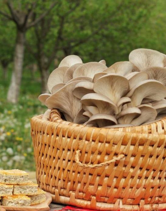 Ciupercăria Breaza