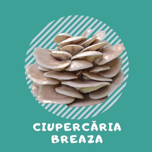 logo Ciupercăria Breaza